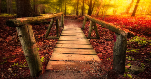 A Walk in The Woods Quiz - Relational Psychology Quiz