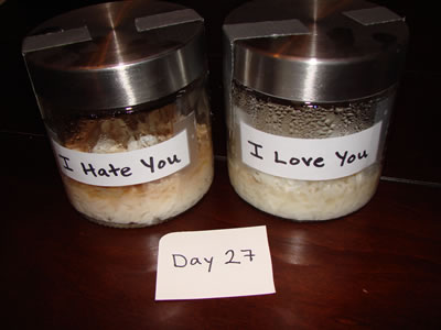 Dr.Emoto-rice-experiment