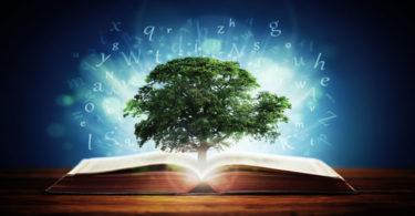 image of tree of knwoledge