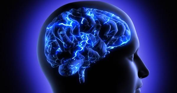 brain 1 (2)