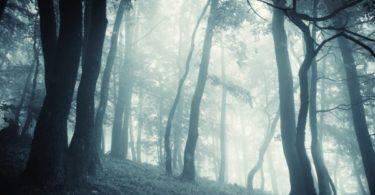 Enchanted mystical fantasy forest with fog