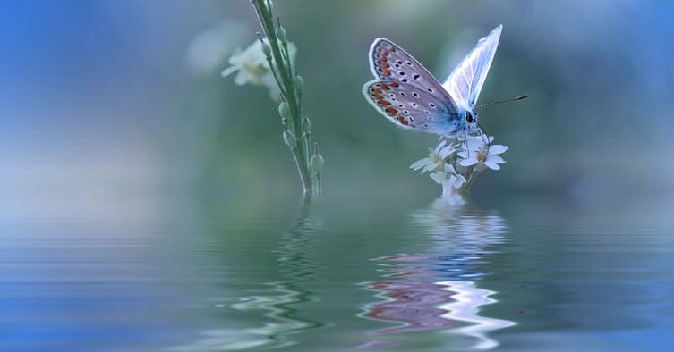 Blue Magic butterfly over water and wildflowers...