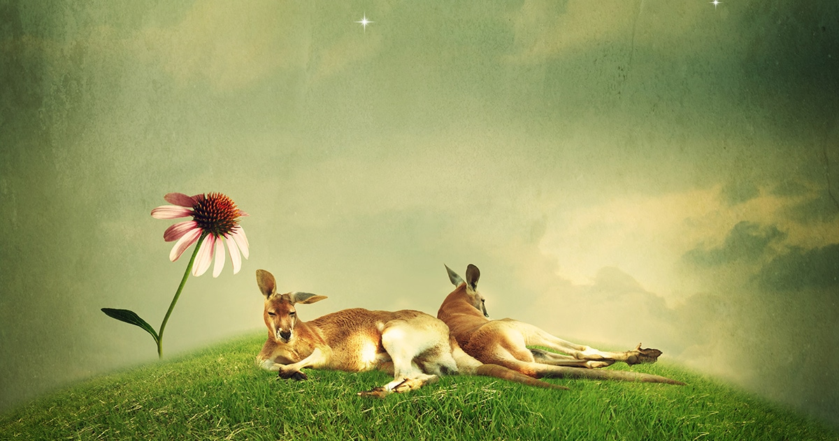 kangaroos lying on a hill in the moonlight