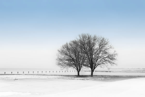 lone-tree-winter