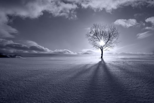lonetreein-winter
