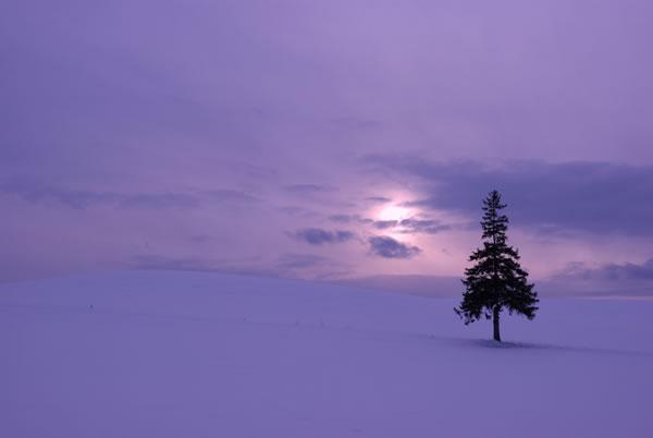 purple-sky-winter