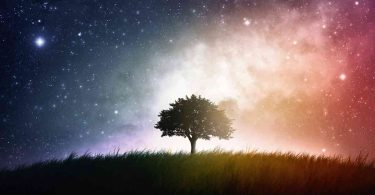 image of tree with milky way in the background
