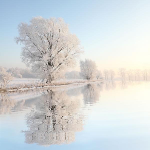 white-tree-winter